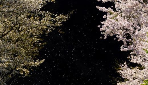 富士フォトギャラリー銀座で写真展「輝きの瞬間」が開催