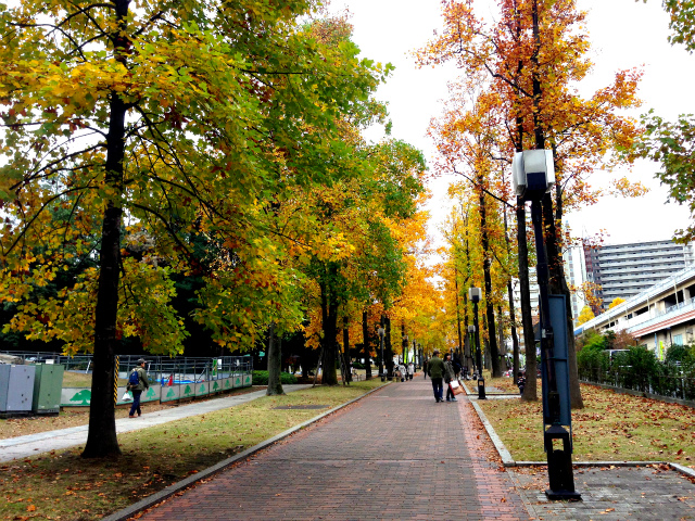 The town is autumn colored (Weekly Tokyo stroller 11 / 12)