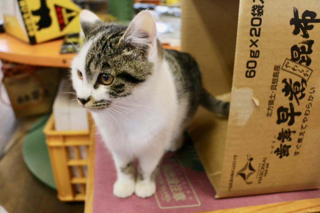 Japan's easternmost cat?