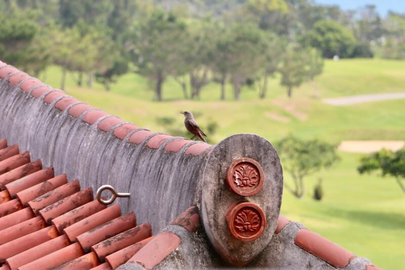ザ・リッツ・カールトン沖縄 ベイデラックスルーム ベランダの眺め 鳥