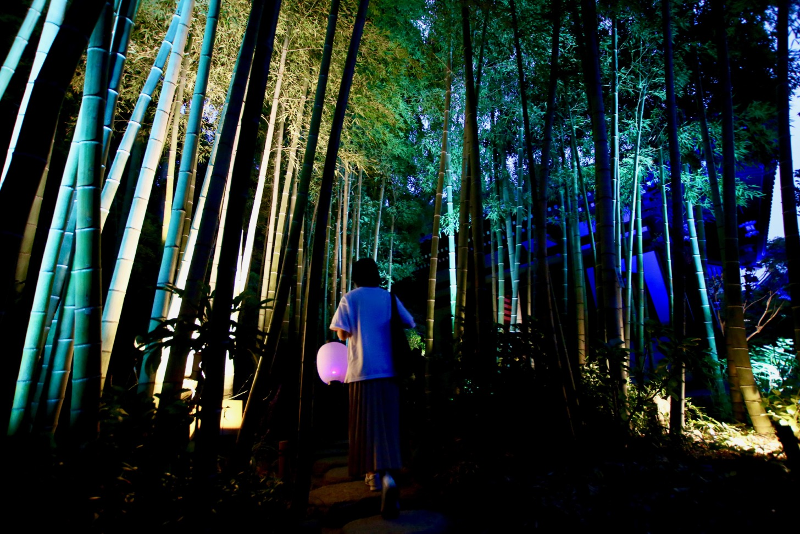 かまくら長谷の灯かり 長谷寺 竹林