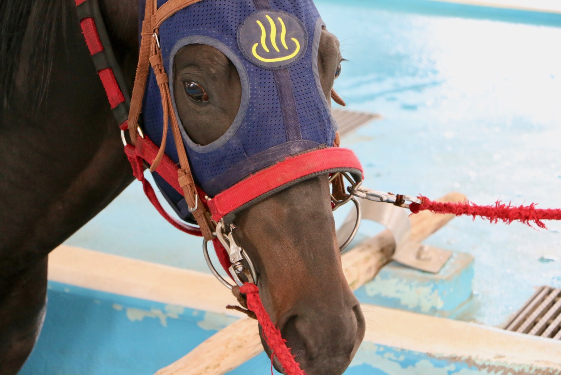 JRA 競走馬リハビリテーションセンター 温泉マークを付けたお馬