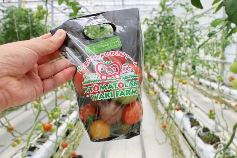 いろんなトマトが詰め放題なトマト狩りは1袋972円税込