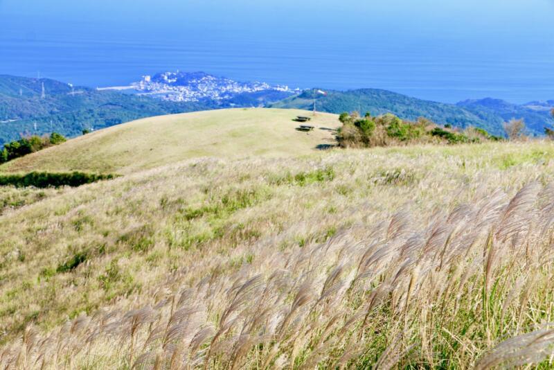 稲取細野高原で秋のすすきイベント 三筋山山頂からの絶景