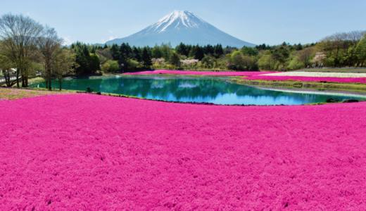 【GWからが見頃】「2018富士芝桜まつり」は8種類の芝桜と富士山のスペシャルコンボが楽しめる
