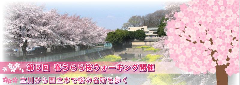 立川から国立の桜の名所を歩く「春うらら桜ウォーキング」が今週末開催
