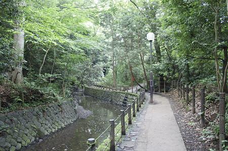 東急・東武合同ウオーキングイベント「多摩川沿いを訪ねて等々力渓谷をめぐるウォーキング」が今週末開催