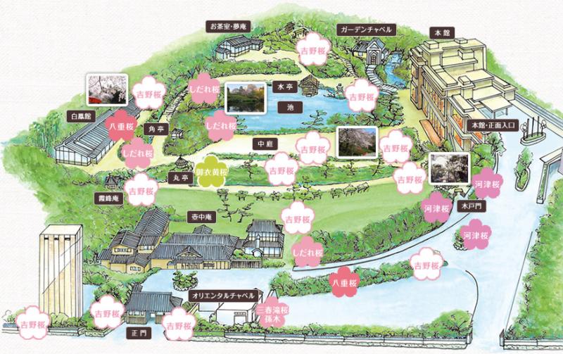 庭園マップ|八芳園 さくら時間
