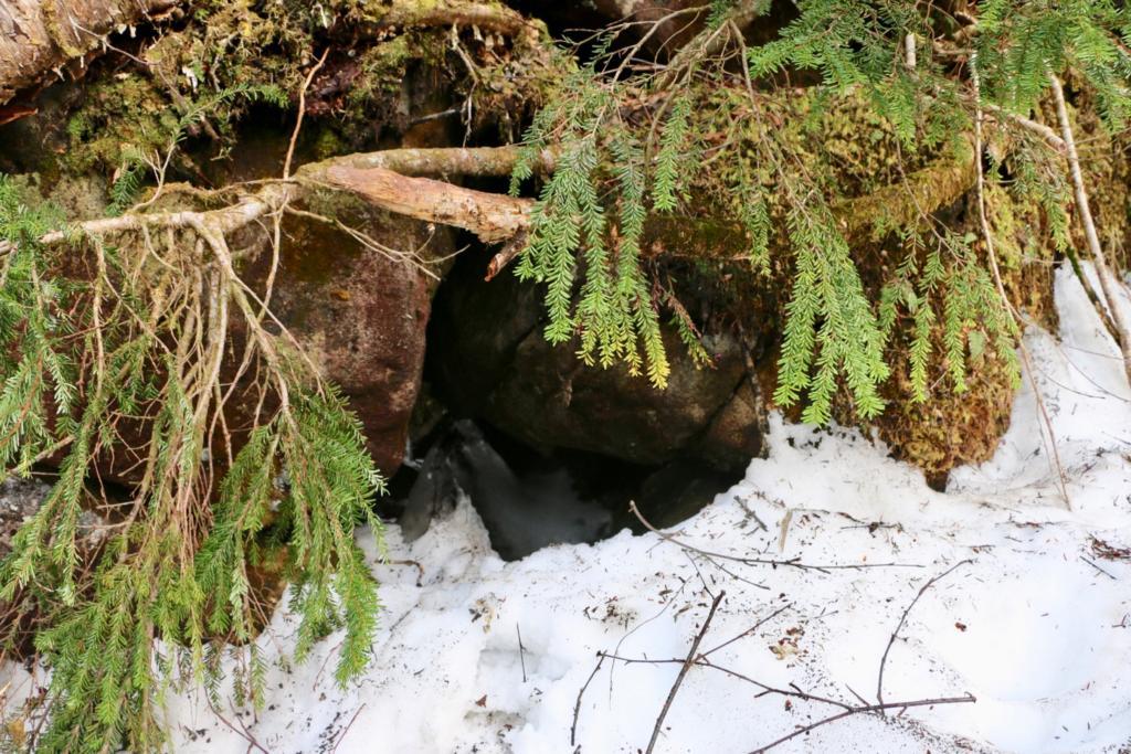 栂池自然園の風穴