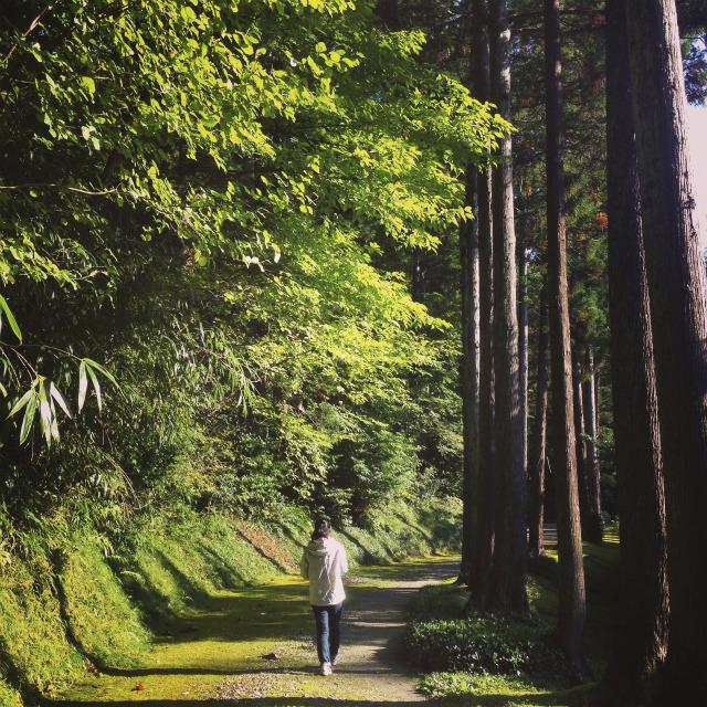 【新潟・湯田上温泉】「越後乃お宿 わか竹」のレトロな雰囲気と朝散歩に癒された