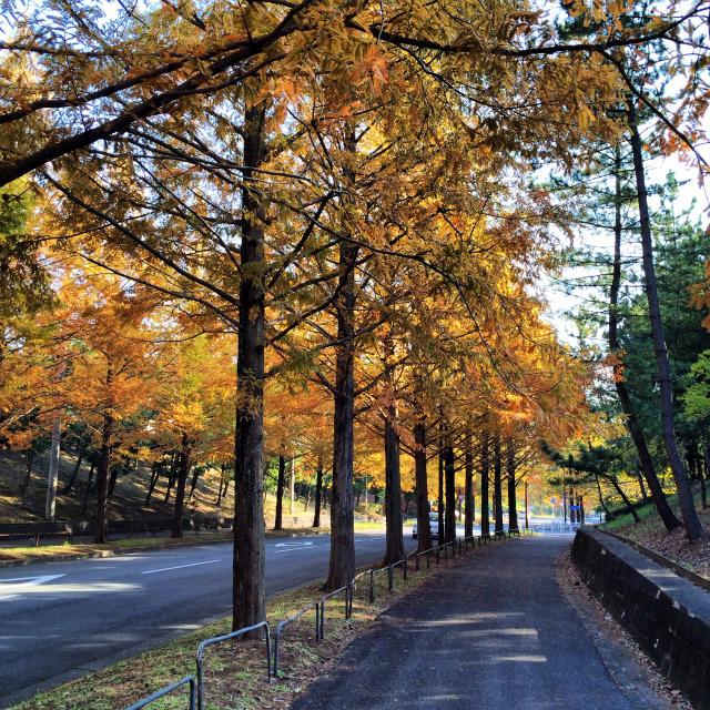 多摩の秋、朝の散歩(週刊 東京散歩ぽ11/18)