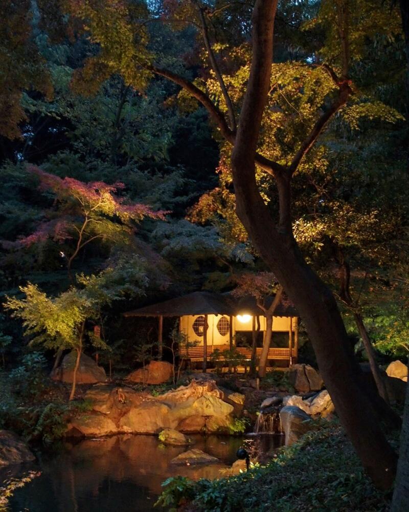 【駒込さんぽ】六義園で「紅葉と大名庭園ライトアップ」