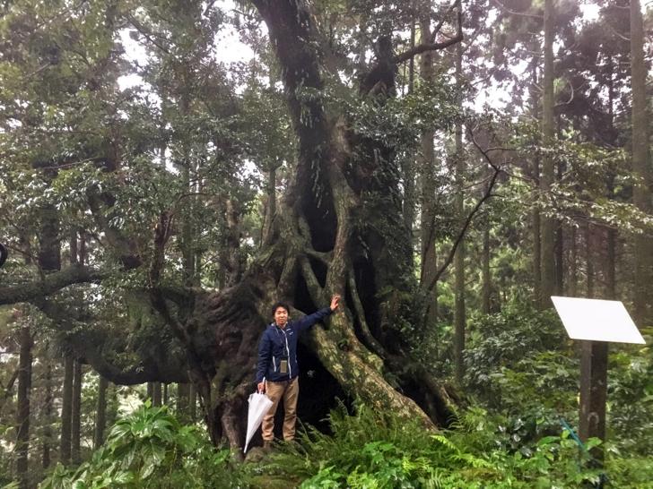 【御蔵島さんぽ】日本一のスダジイに囲まれた原生林をトレッキング!御蔵島にイルカが多い理由とは?【PR】