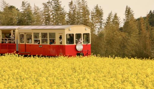 [Chiba Sanpo] Photo gallery of Obuchi Road and Isumi Railway that runs in a rape field and cherry blossoms