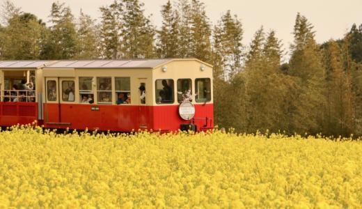 【千葉さんぽ】菜の花畑と桜の中を走る小湊鐵道・いすみ鉄道をフォトさんぽ #こぶツアー #Locketsリレー2018春