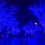 【年越しイルミ】「青の洞窟 SHIBUYA NEW YEAR WALK」オールナイト点灯が開催決定