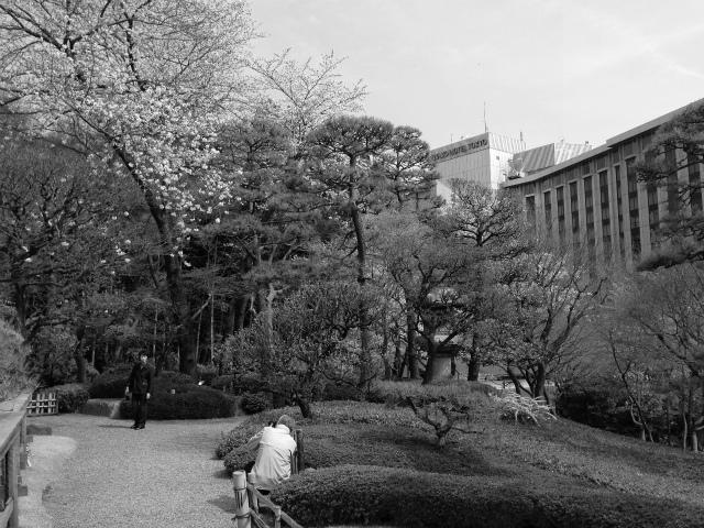ご夫婦も桜をバックに写真