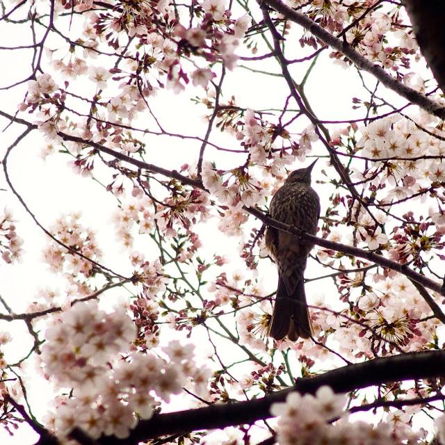 野鳥たちの楽園