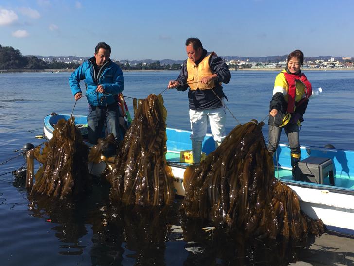 【八景島・金沢漁港】昆布の養殖で脱温暖化に取り組む「横浜ブルーカーボン事業」