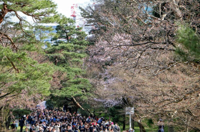 【4/3(日)まで延長決定!】平成28年春季皇居乾通り一般公開