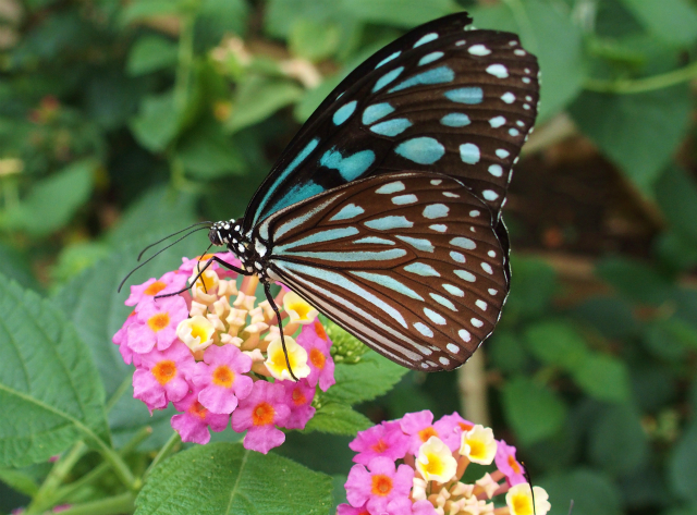 [Tama Animal Park] Insect ecology garden of free range of more than XNUMx butterflies too much