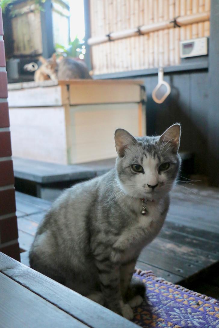 【ネコ天国】南房総「月影の丘ホテル ヴィラ勝山アヴェール」で12匹の看板猫に癒されてきた