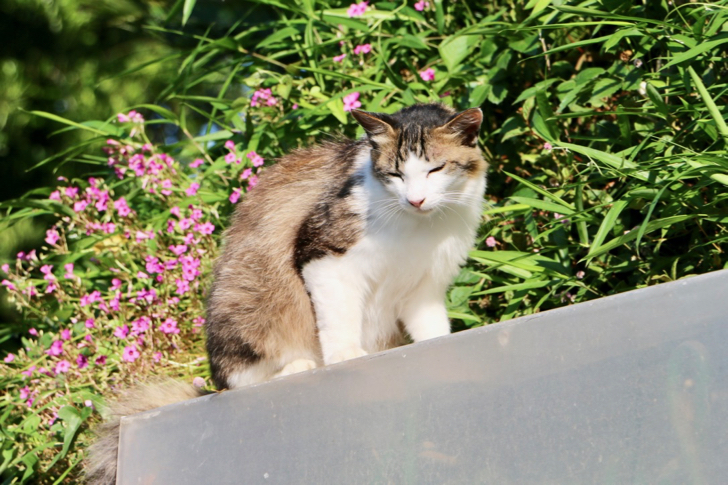 ヴィラ勝山アヴェールのネコ