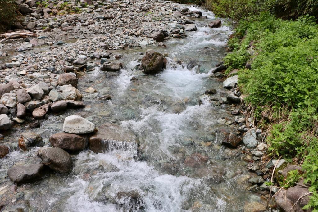 池自然園の楠川