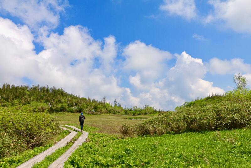 栂池自然園・絵葉書のような天空の絶景の中をハイキングしてきた【長野県小谷村さんぽ3】 #いちばん美しいところ #栂池自然園