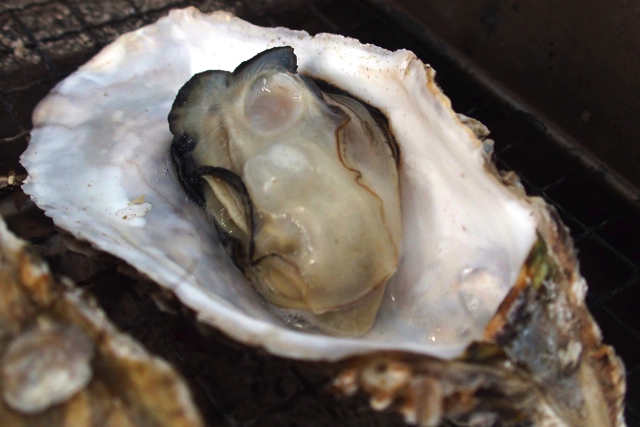 【Yokohama Hakkeijima】 Grilled oysters and seafood from the mare in the oyster hut for a limited time!