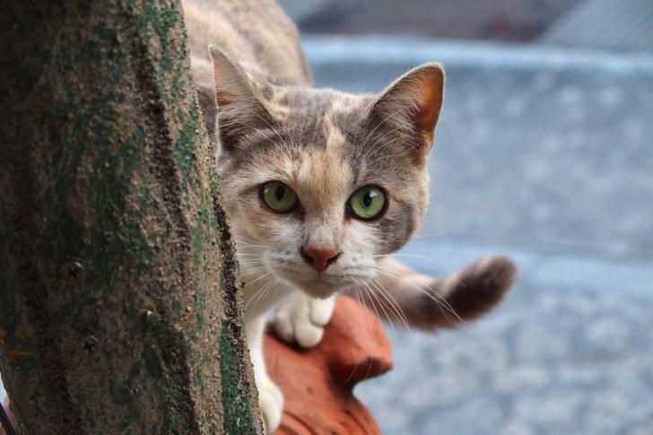 沖縄さんぽで出会った猫たち
