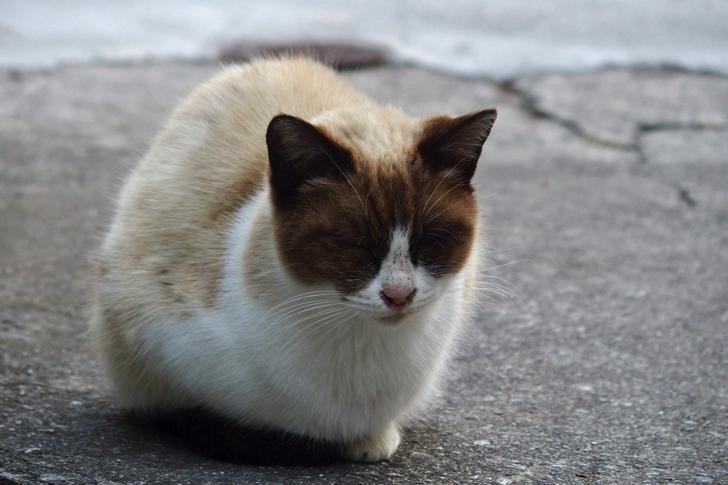 沖縄の眠り猫