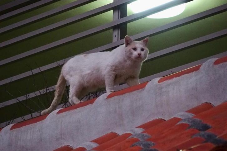 壺屋陶芸センターの2階にいた猫