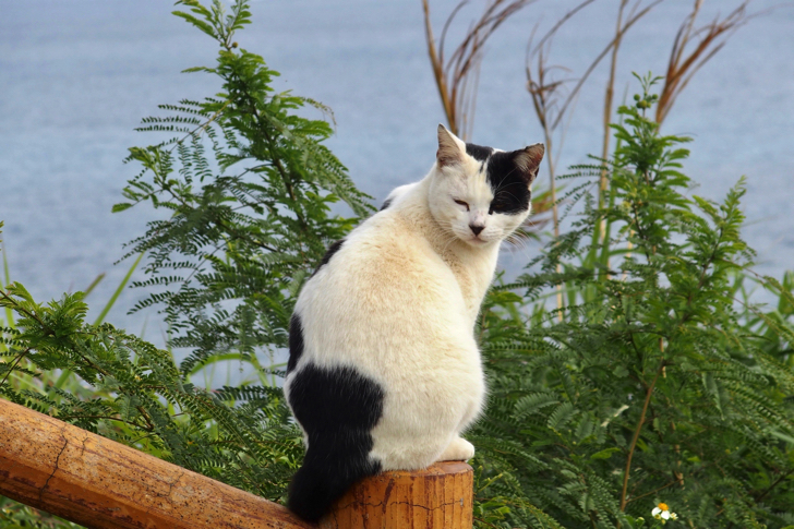 南城市の知念岬公園にいた猫