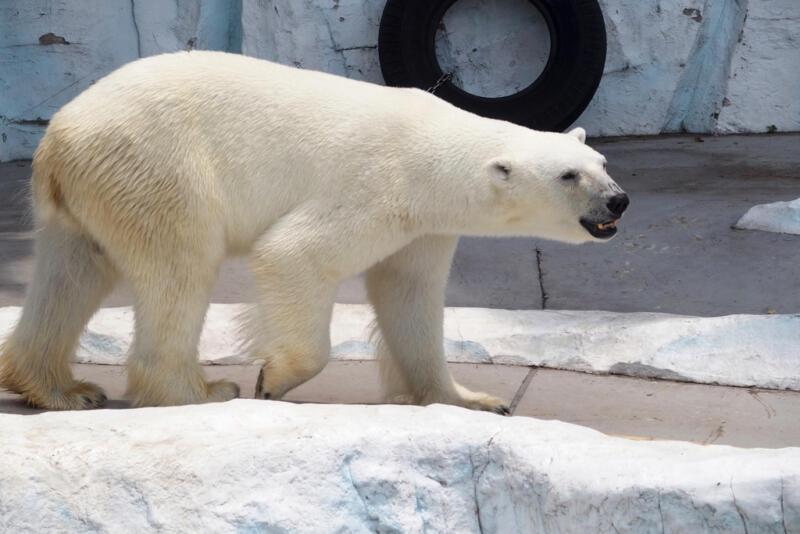 【8/8〜8/16】オープンビアガーデンも!上野動物園で「真夏の夜の動物園」が開催