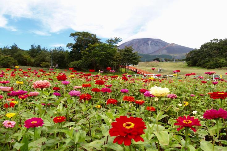 富士花めぐりの里