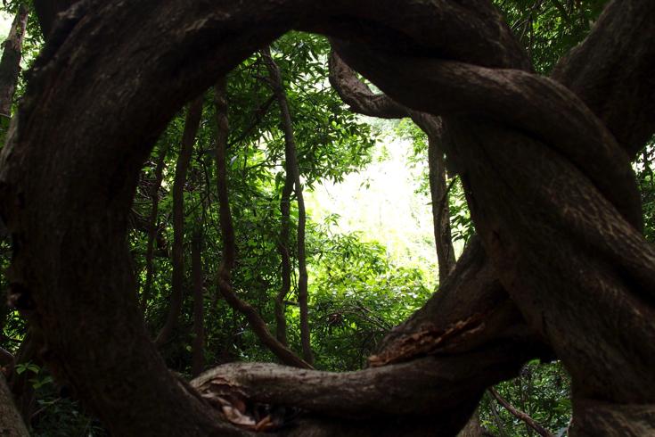 【茨城県守谷市】「野鳥の森観察路」をさんぽする #守谷ブロガーツアー
