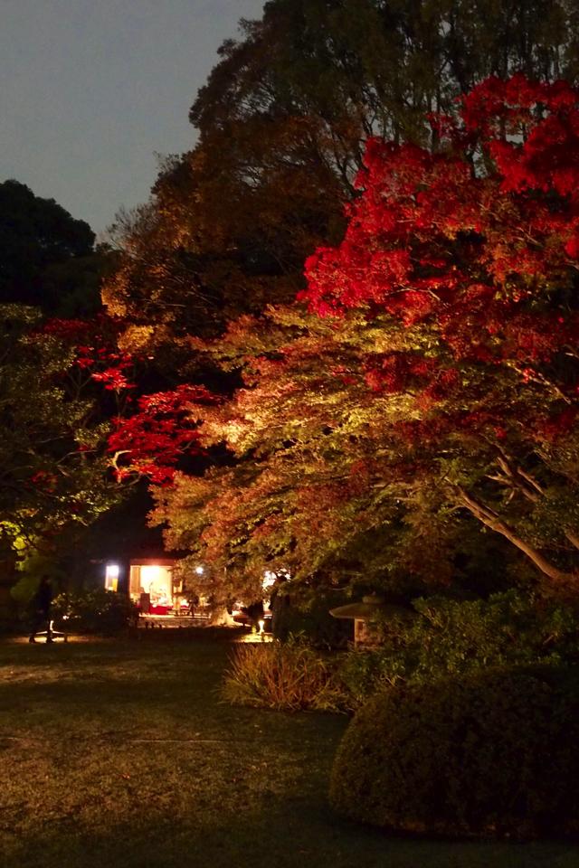 六義園で紅葉ライトアップ