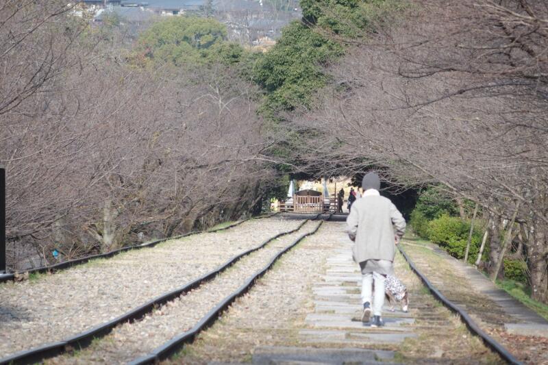 【京都・蹴上インクライン】世界最長の傾斜鉄道跡を廃線さんぽ