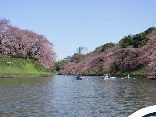 千鳥ヶ淵花見さんぽ&ボートを楽しむ その1