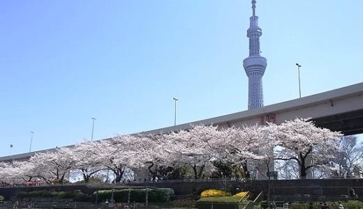 黄金の東京スカイツリーも見えた!「春うらら隅田川花見クルージング」に行ってきました。