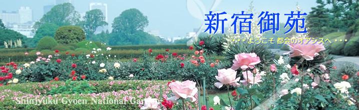 500株のバラが間もなく見頃に!「新宿御苑のバラを作る人と語るガイドウォーク」が開催