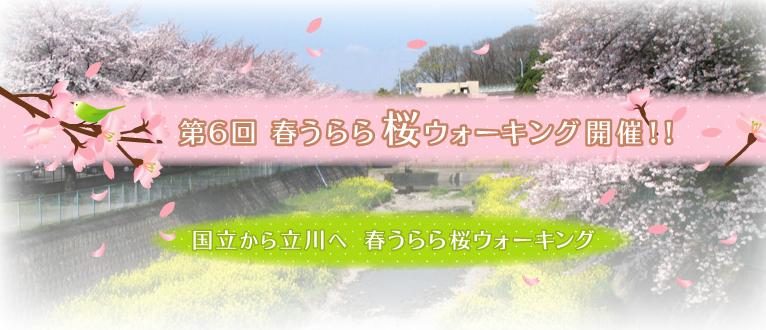 第6回春うらら桜ウォーキング 国立から立川へ 春うらら桜ウォーキング