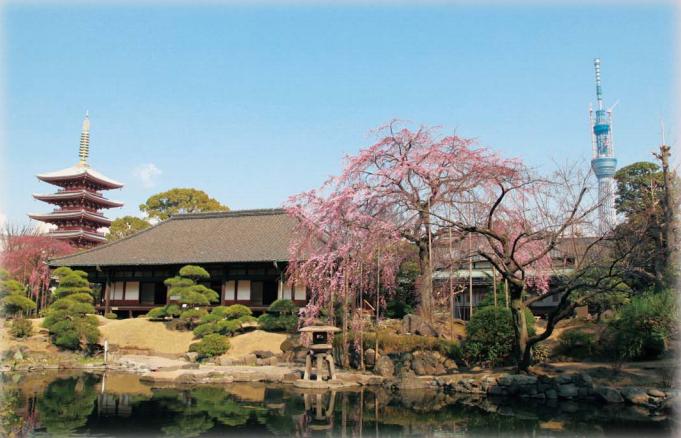 樹齢300年のしだれ桜が見れる!浅草寺「大絵馬寺宝展と庭園拝観」が開催中
