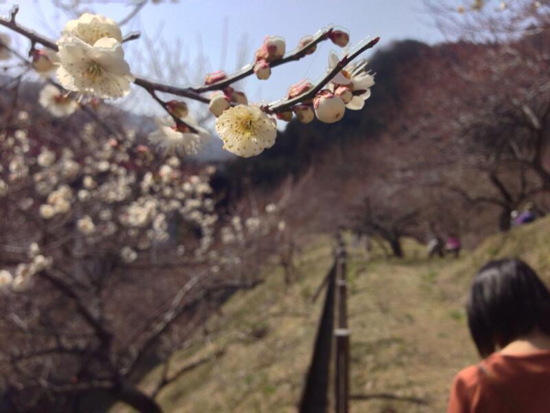 春が来る(週刊 東京散歩ぽ3/11)