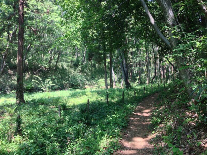 「トトロの森ふるさと基金」主催の散策会