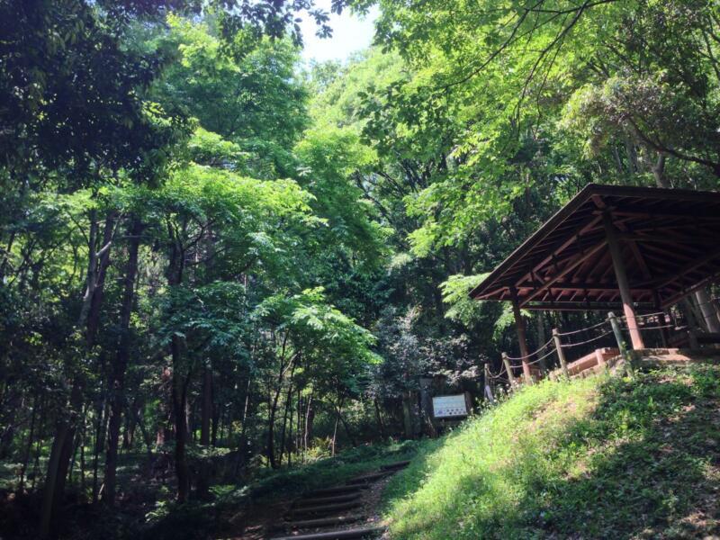 トトロの森」